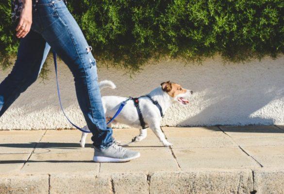Promenade et garde d'animal domestique à domicile, dans le 78, par CBL Réagir