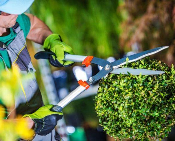 Services entretien espaces verts dans le 78